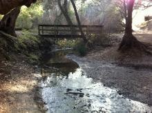 creek, Rancho San Antonio
